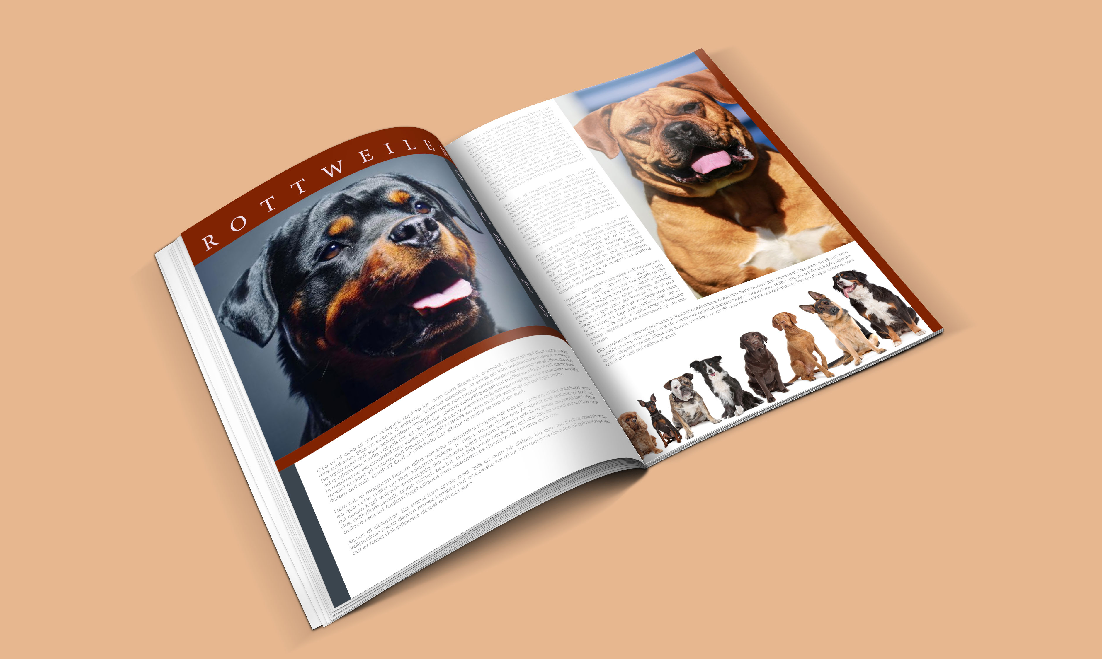 dogs-catalogue-design-template-in-ai-indd-pdf-format-4